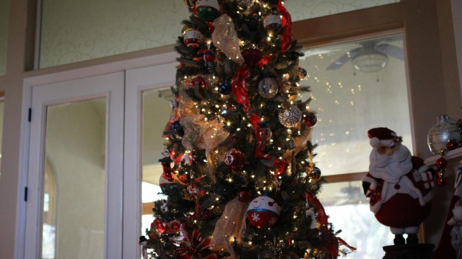 Real+vs+Artificial+Christmas+Trees